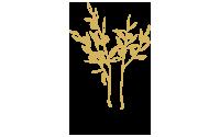Natasa Lagou - Client, Gold Tree Olive Oil